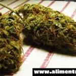 El compuesto de cannabis puede eliminar la proteína tóxica de Alzheimer del cerebro