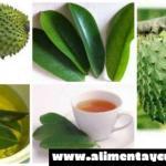 Forma correcta de preparar el té de hojas de guanábana para matar las células del cáncer, controlar el asma y la diabetes, calmar los nervios e inducir al sueño y…