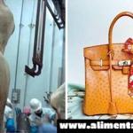 Impactante: ¡Avestruces bebé sacrificadas para hacer los bolsos del lujo de Lois Vuitton!