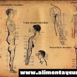 La ciencia demuestra finalmente la existencia de los meridianos de acupuntura.