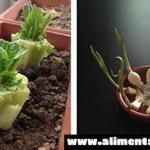 10 verduras que usted puede comprar una vez y volver a cultivar para siempre!