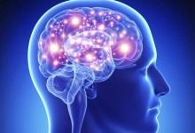 beneficios para el cerebro