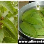 Descubre todos los beneficios de las hojas de guayaba ¡Te sorprenderás!