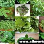 ¡Enhorabuena Se Han Descubierto 15 Plantas Y Hierbas Para Purificar Los Pulmones Y Mejorar La Respiración…Dile ADIÓS A La Gripe Y A La Flema!