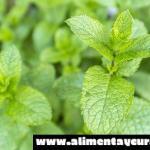 Hierbas aromáticas: la hierbabuena