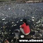 """La comida """"orgánica"""" falsa de China está inundando los estantes de las tiendas, esto es lo que usted necesita saber"""
