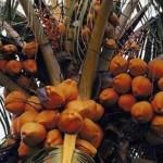 Cocos con ingeniería genética ahora invaden EE.UU.