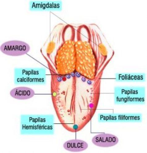 Ageusia – Que es, definición, causas, síntomas, tratamiento