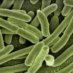 ¿Cómo podemos recuperar nuestro organismo de manera natural tras la toma de antibióticos?