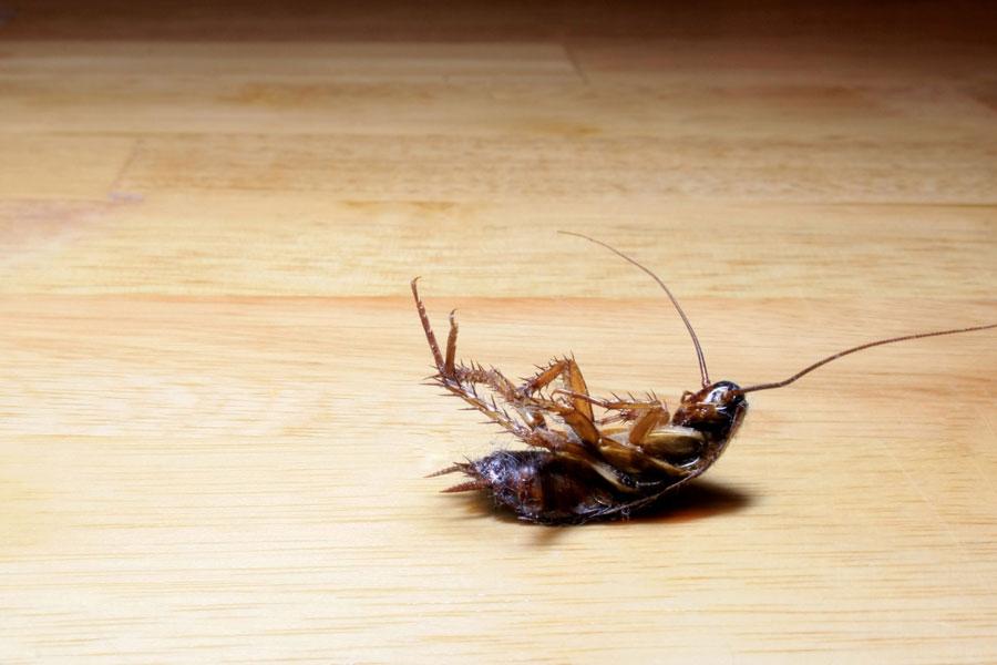 Como eliminar ratones en casa viendo desde arriba la - Eliminar moscas en casa ...