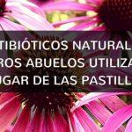 Los Antibióticos Naturales que Utilizaban Nuestros Ancestros