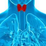 15 alimentos ricos en selenio para una tiroides potente