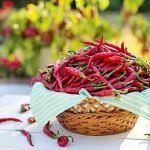 Propiedades y Beneficios de la cayena