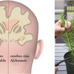 Protégete del Alzheimer, ansiedad y depresión con estas 4 hierbas
