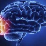 7 vitaminas para cuidar de tu cerebro