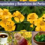 Propiedades del Pericón y los beneficios de su té para adelgazar