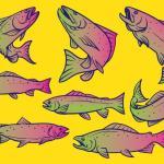 10 peces contaminados que no deberías comer