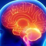 5 efectos negativos del azúcar sobre el cerebro