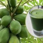 Aprende como preparar este jugo de hojas de papaya para desintoxicar el hígado, revertir el hígado graso y mucho más