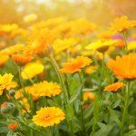 Las 15 Plantas que deberíamos tener en casa para atraer la energía positiva según el lugar donde lo coloquemos