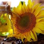 Los aceites de semillas son mejores para el colesterol que el aceite de oliva.