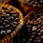 Acai Berry para perder peso: qué es, cualidades y utilidades para la salud