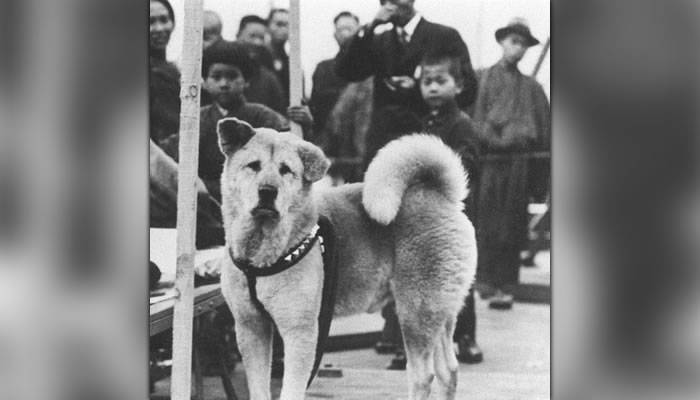 Povestea extraordinara a lui Hachiko, cel mai loial caine din lume