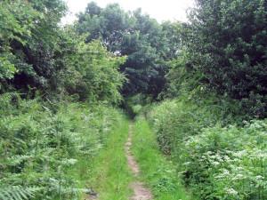 Stinting Lane, UK, 2007