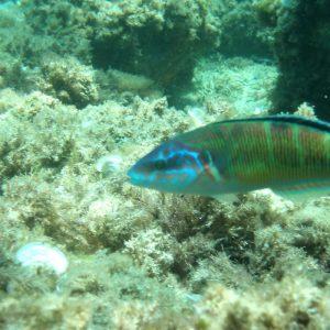 snorkel tabarca