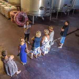 excursion viñedos ali oli tours