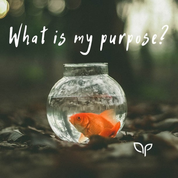 What is my purpose in life? by Ali Poulton Coaching