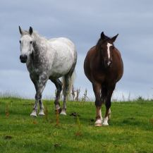 Mare and daughter