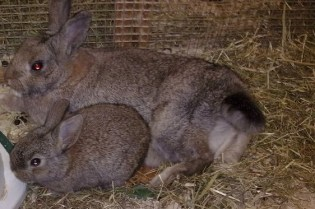 Mother and Baby Rabbit