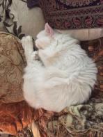 zzz kitty (5)