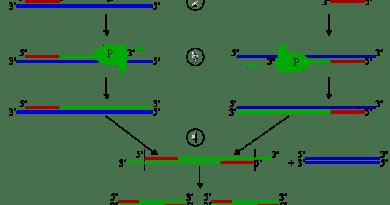 पीसीआर: पोलीमरेज श्रृंखला अभिक्रिया Polymerase Chain Reaction PCR