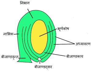 पुष्पीय पादपो में जनन sexual reproduction in flowering plants hindi