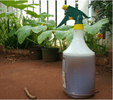 Worm Compost Tea