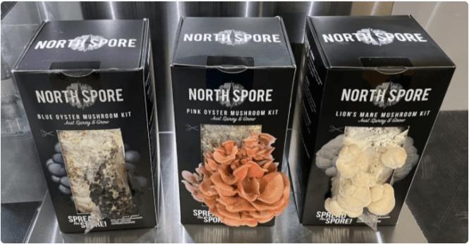 mushroom-fruiting-chamber