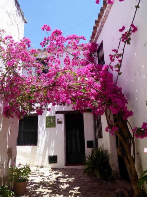 Whitewashed street with tree in Castellar de la Frontera