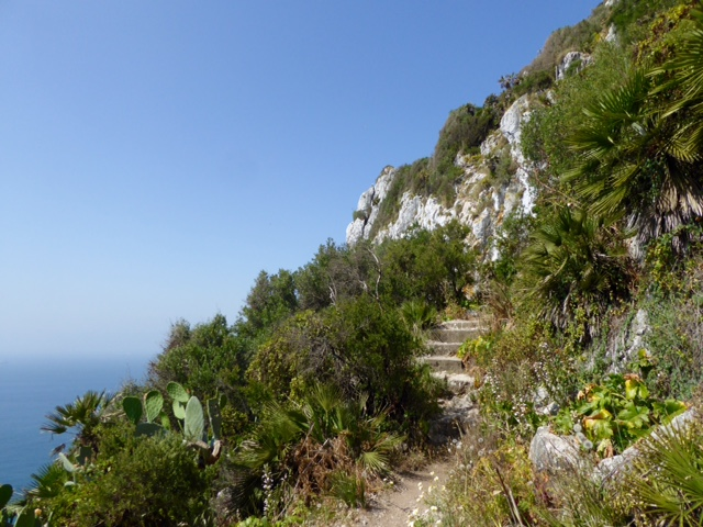 Med steps view