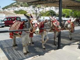 Donkeys waiting for tourists