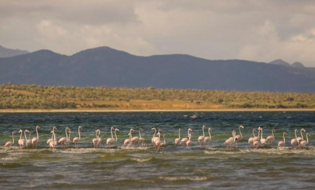 Flamingoes on unknown saline lake on the way to Ifotaka