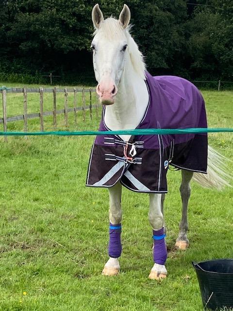 Liz Earle Blue  Horse