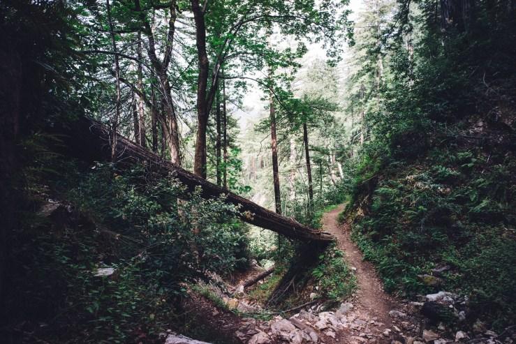 woods-1246177_1920