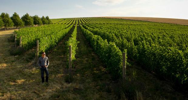 Figgins Wine
