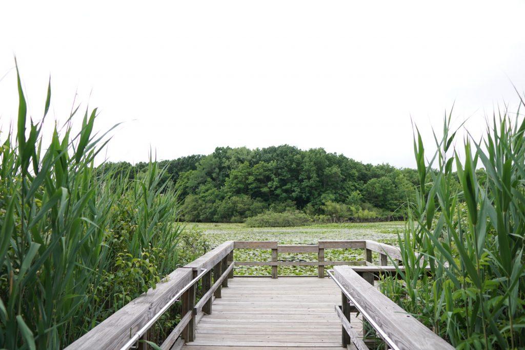Sharrott's Pond in Sandy Ground