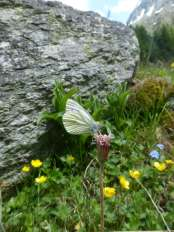 I was pleased to capture this shot as white butterflies never seem to stay still for long.