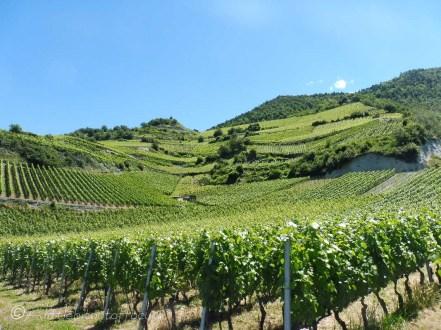 6 Rhone valley vineyards