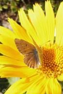 26 Butterfly on flower
