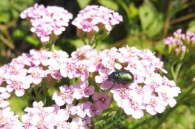 8 Bug on pink flowers